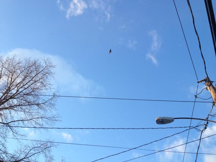 hawk high above