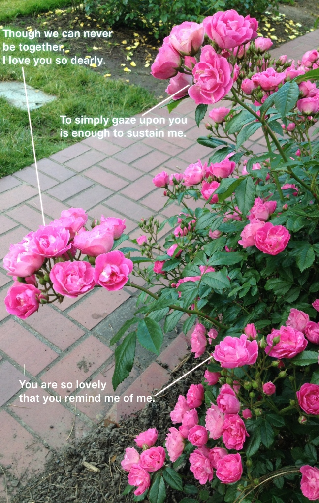 Random Anthropomorphism: Roses
