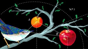 bird_diagram_final_wide-f57ad53cb648cd6a830907907811e189be432798-s1400-c85