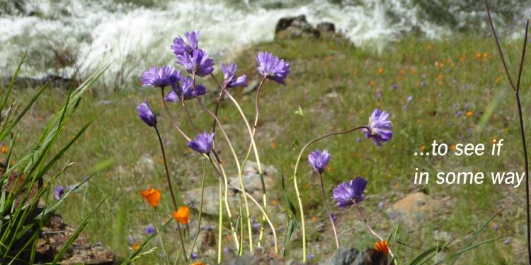 flowers-&-water1