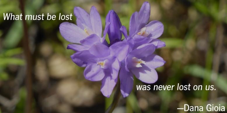 lost-alt